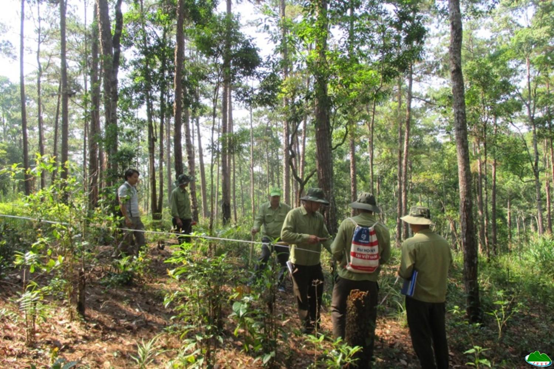 Tập huấn Điều tra rừng trồng và rừng tự nhiên tại Công ty TNHH MTV Lâm nghiệp Bảo Lâm