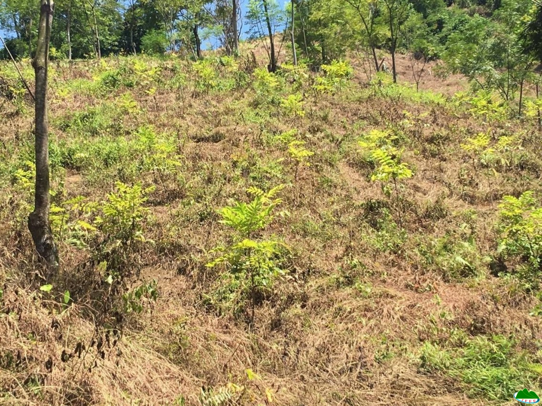 Đánh giá kết quả thực hiện mô hình phát triển sinh kế bằng các loài cây đặc sản rừng