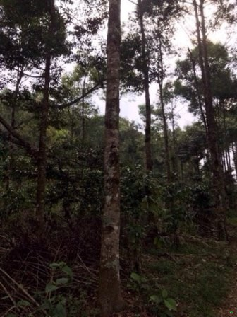 Reforestation on the forest land which is currently used for planting agricultural and industrial crops by applying agroforestry solutions in the period 2018- 2020